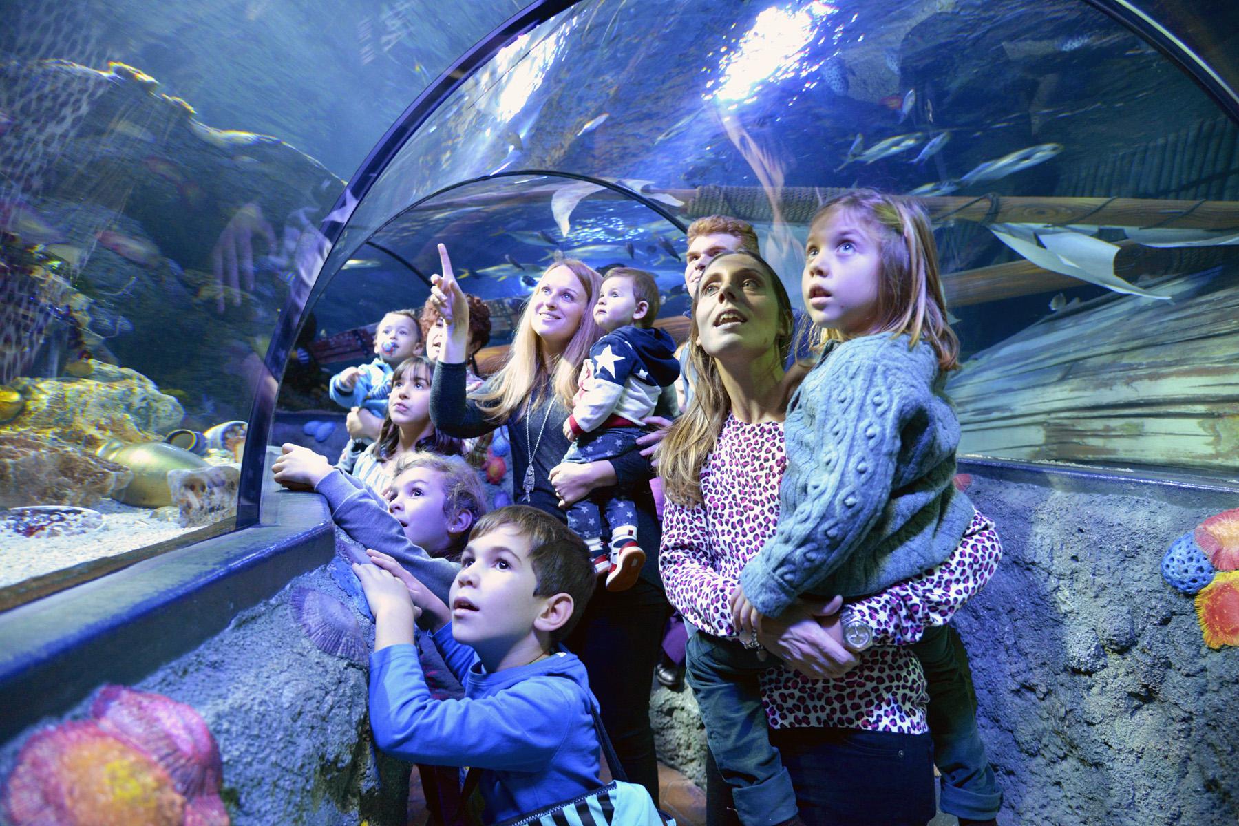 Gardaland SEA LIFE Aquarium  (3)
