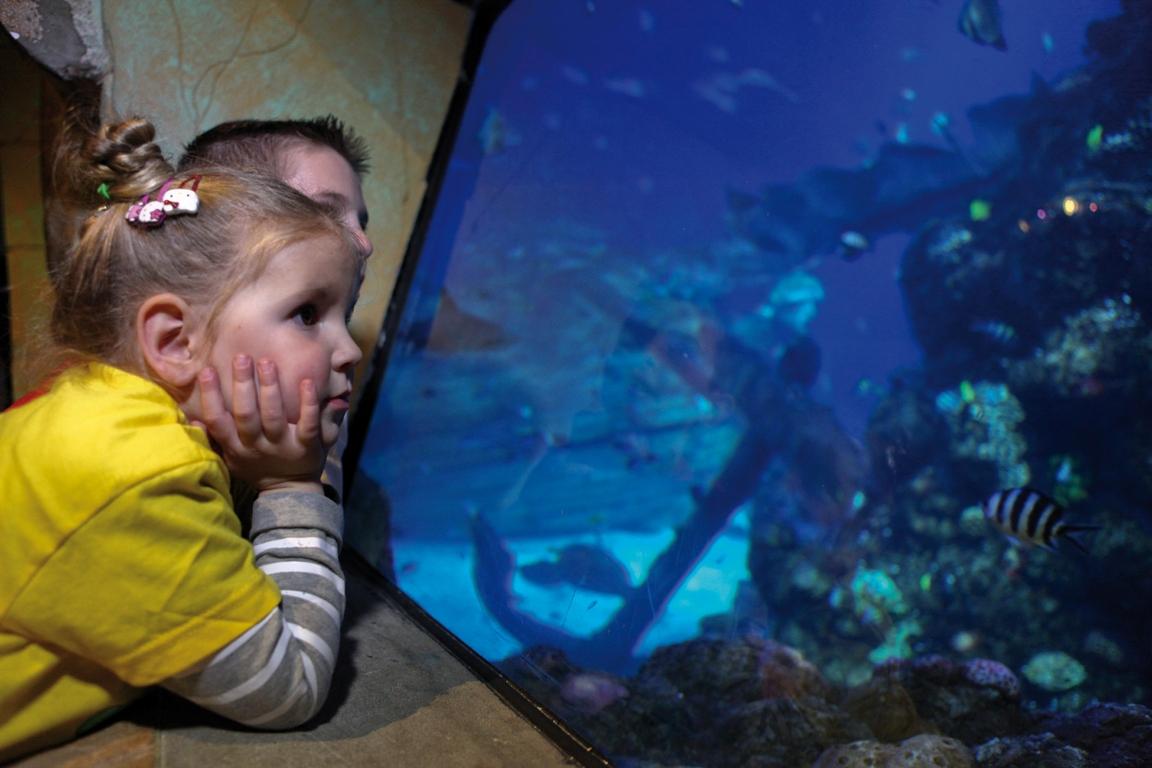 Gardaland SEA LIFE Aquarium  (6)
