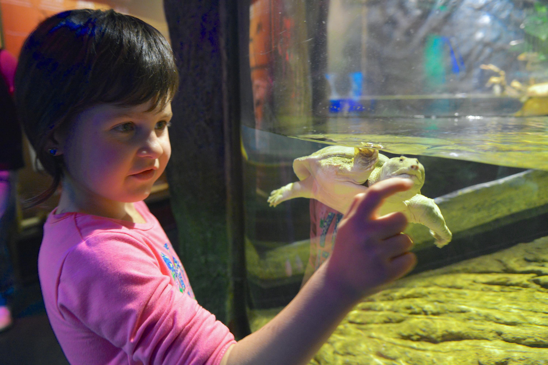 Gardaland SEA LIFE Aquarium_Paradiso delle Tartarughe (12)