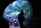 garland sea life verona con bambini